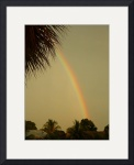 Golden Rainbow...large format (.tif) by Jacque Alameddine