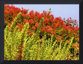 Red Beach Flowers