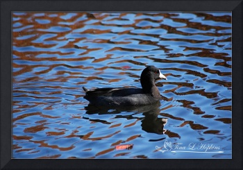 Rhapsody in Coot 20131101_167a