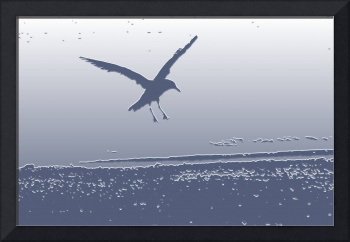 Seagull Image in Flight