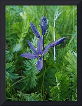 Wildflower - Common Camas - Outdoors Floral