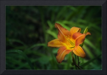 lily with ant