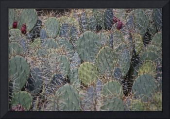 Bunch Of Cacti
