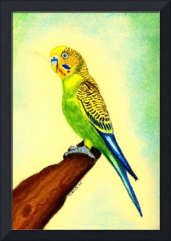 Budgie Bird Portrait Art Print