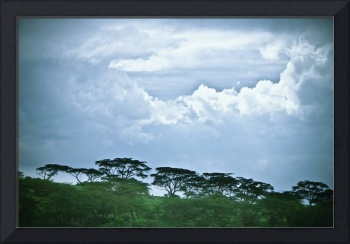Trees Under A Cloudy Sky, Kenya