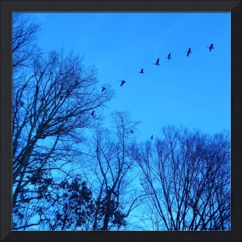 Geese in Blue