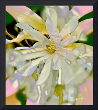 Star Magnolia Blossom Botanical Wall Art