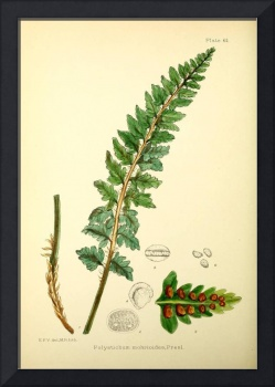Illustrations of the flowering plants and ferns of