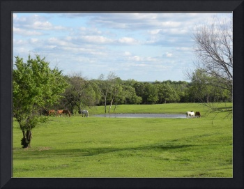 Horses by the Pond in NE Oklahoma #1