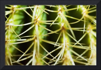 Barrel Cactus, Close-Up Of Thorns