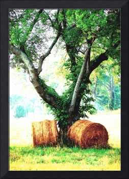 Tree and Hay in Franklin, Tennessee