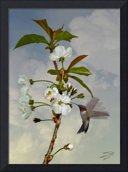 Hummingbird and Apple Blossom