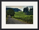 Wine Country by Mark Cullen