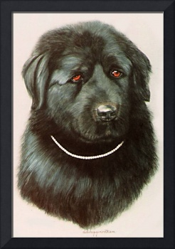 Newfoundland dog painting