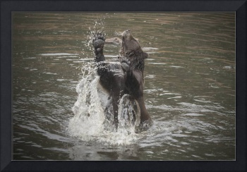 Jumping Brown Bear