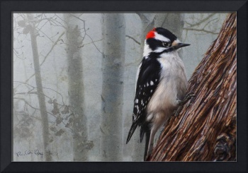 foggy forest downy woodpecker