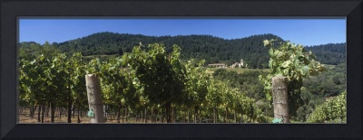 Christian Brothers Hess Collection Vineyard Napa