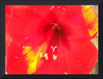 Really Red Flower