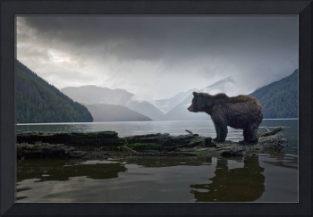 Great Bear Guardian