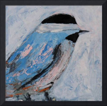 Blue Chickadee Bird