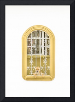 Dog Watching Through Windows House