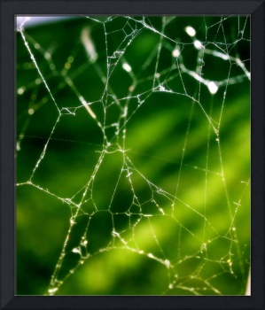 Spider Web Abstract
