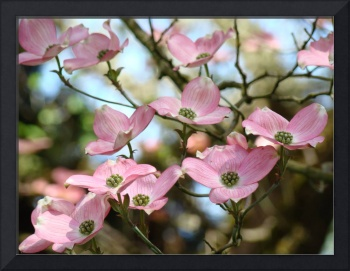 OFFICE ART Dogwood Tree Pink Dogwood Flowers