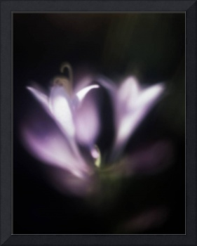 hostas soft and dreamy photographic painting