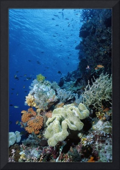 Underwater coral wall with tropical fish and inve