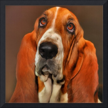 Basset dog portrait