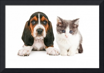 Adorable Basset Hound Puppy and Kitten Sitting