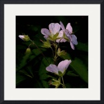 Wild Geraniums by Jim Bavosi
