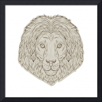 Lion Big Cat Head Mane Drawing