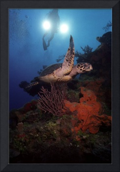 Sea Turtle on coral reef cayman Islands