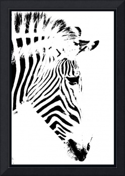 Abstract Photo of a Zebra