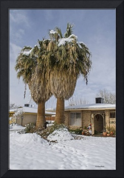 Palm Trees with Snow