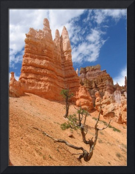 Rock Spires and Tree