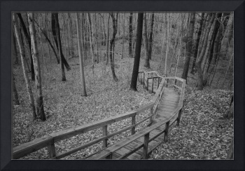 Steep Wooden Boardwalk along Nature trail in Black