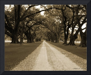 Lane of Oaks Sepia