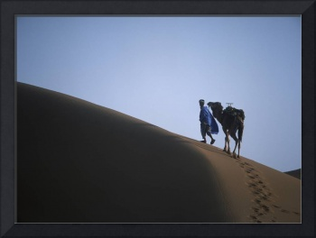 Man And Camel On Sand Dune Morocco
