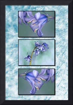 Bluebells Triptych with Texture