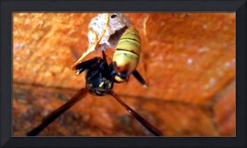 New Mexico Yellow Jacket 3