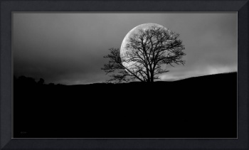 Moon Rise and Winter Tree