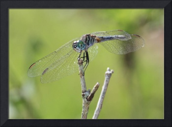 Dragonfly Against Green