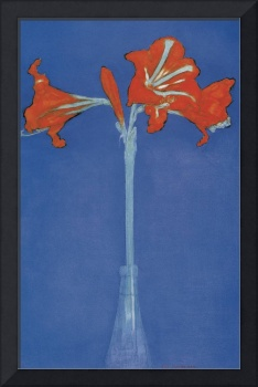 Mondrian Amaryllis in a Flash in front of a blue b