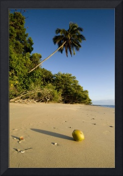 coconuts and palm trees on the beach