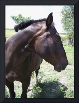 Ranch horse profile