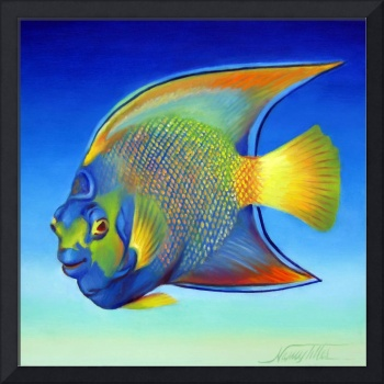 Juvenile Queen Angelfish Also