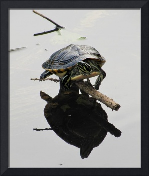 Map Turtle Reflection