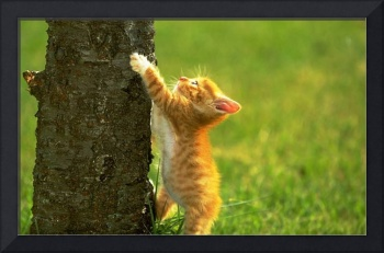 Hang On Orange Kitten